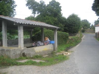 Lavandera gallega